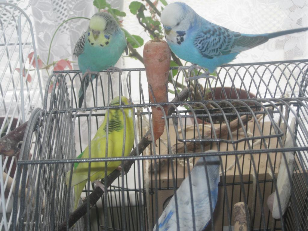 Sky & Jessie-Blue go visiting-img_4018.jpg