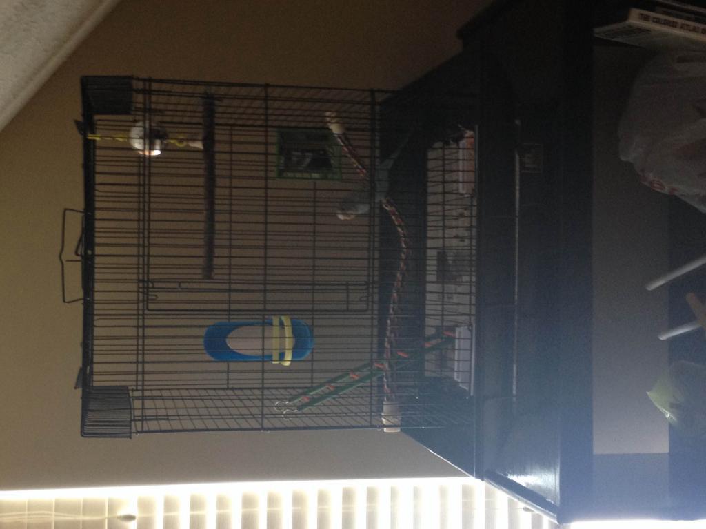 My first bird: Lucina!-img_4077.jpg