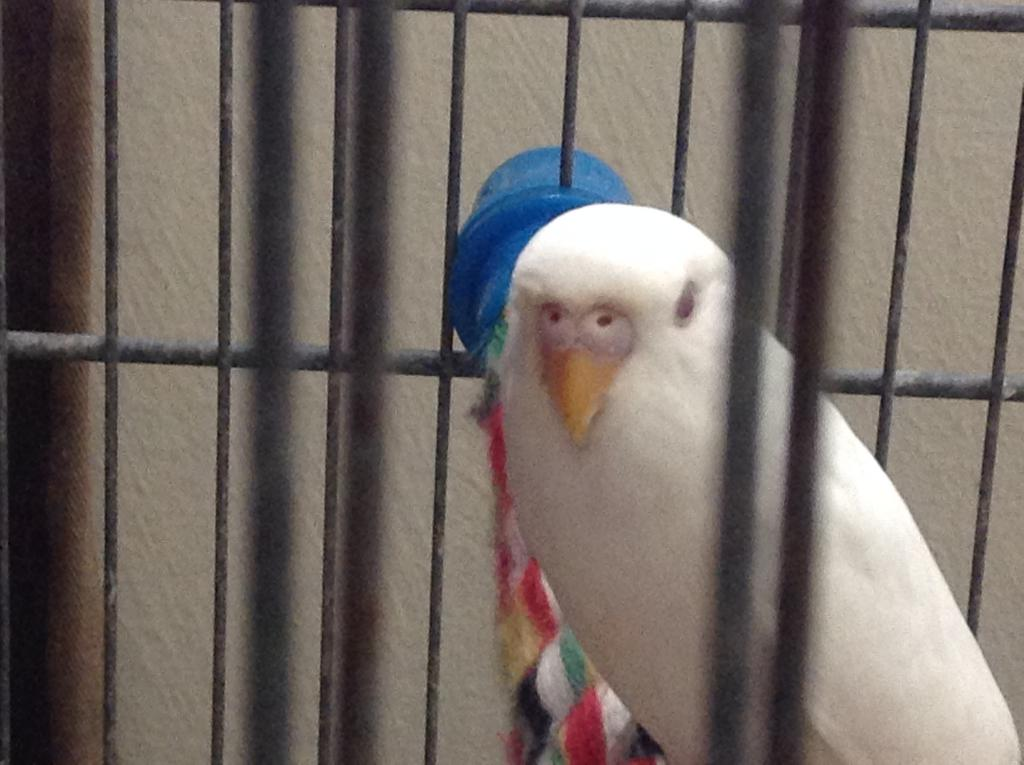 New Budgie - Assistance Request-img_4540.jpg