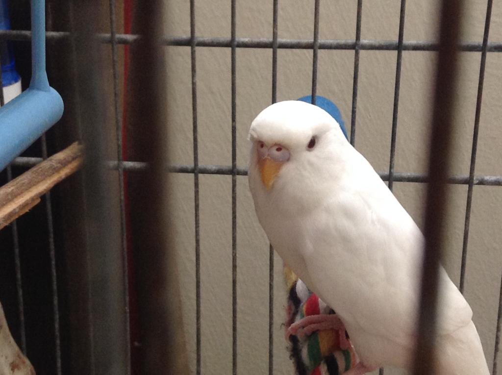 New Budgie - Assistance Request-img_4553.jpg