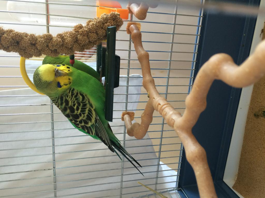 My bird has diarrhea and is sleepy-img_4578.jpg