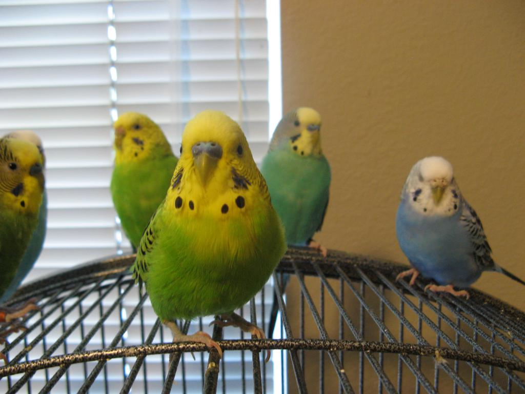 Theta's flock (on-going thread)-img_4764.jpg