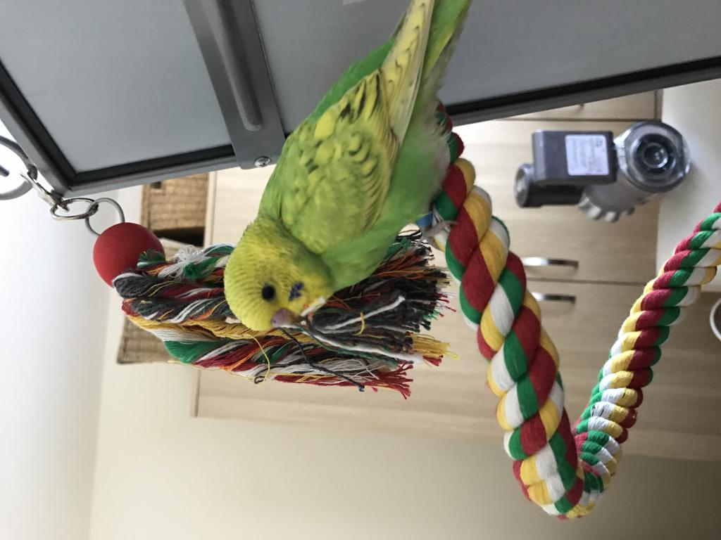 New budgie's cage setup - opinions?-img_5869.jpg