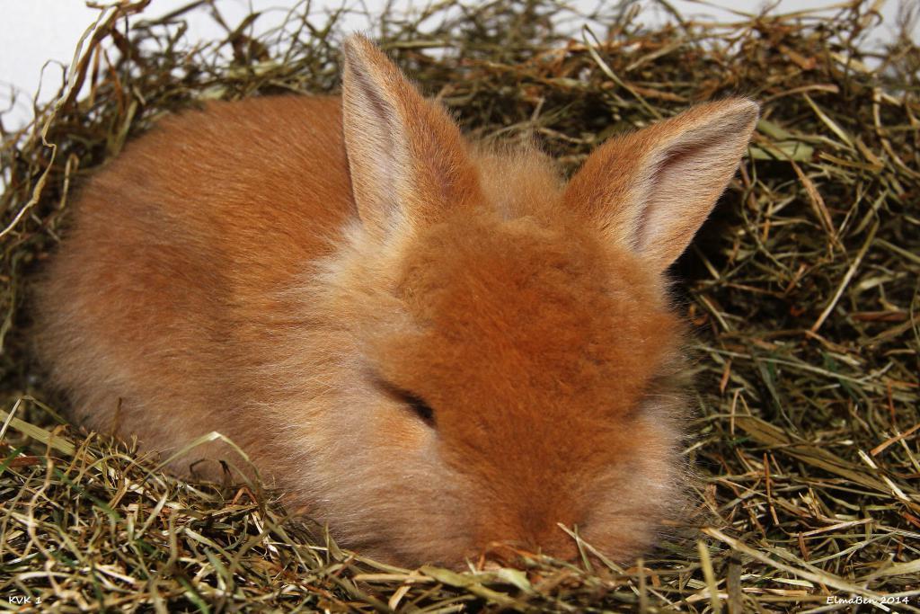 My baby bunnies-img_6525x.jpg
