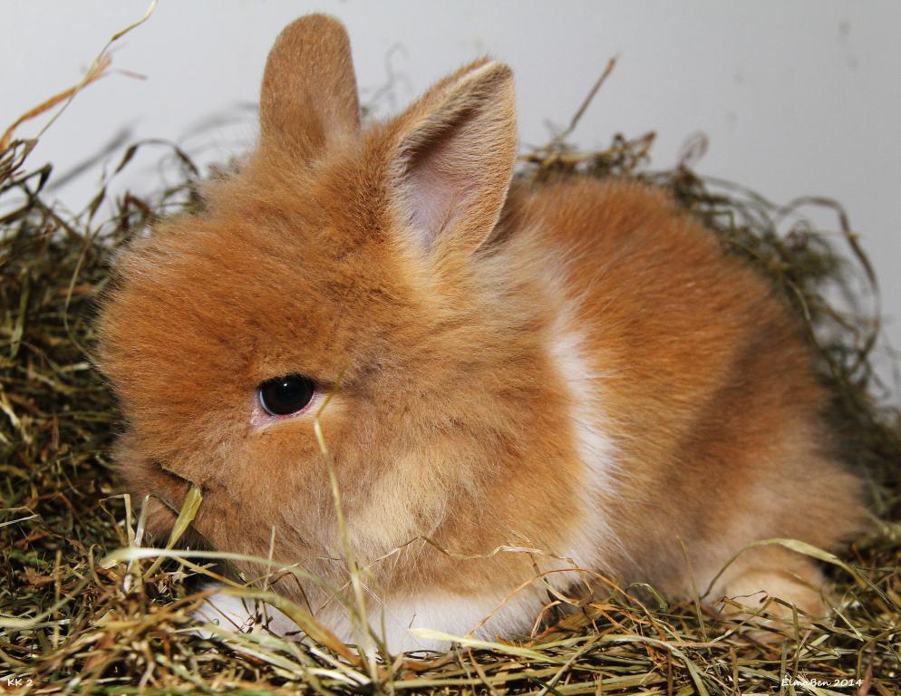 My baby bunnies-img_6550x.jpg