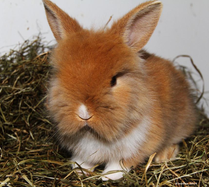 My baby bunnies-img_6556x.jpg