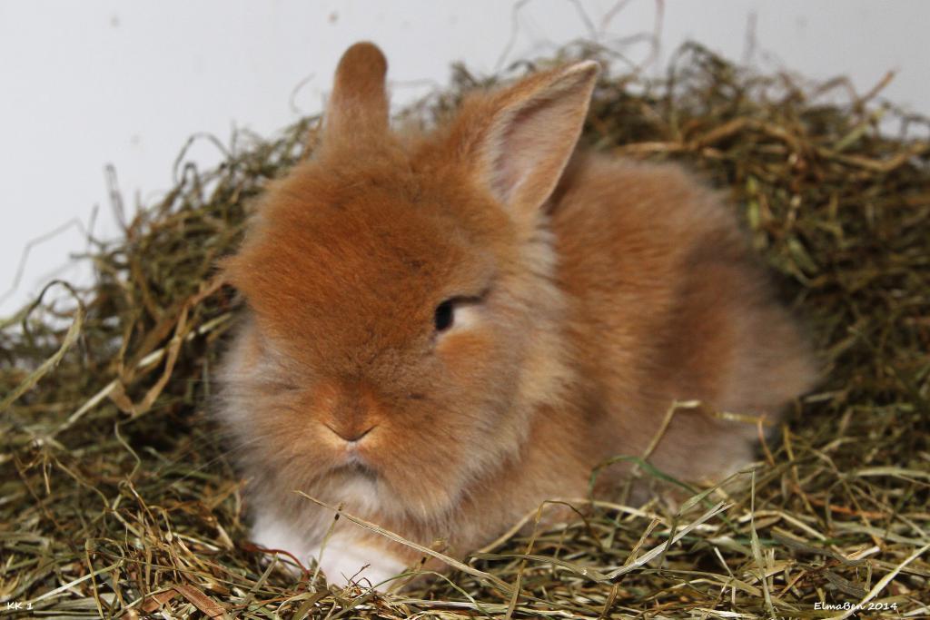 My baby bunnies-img_6580x.jpg