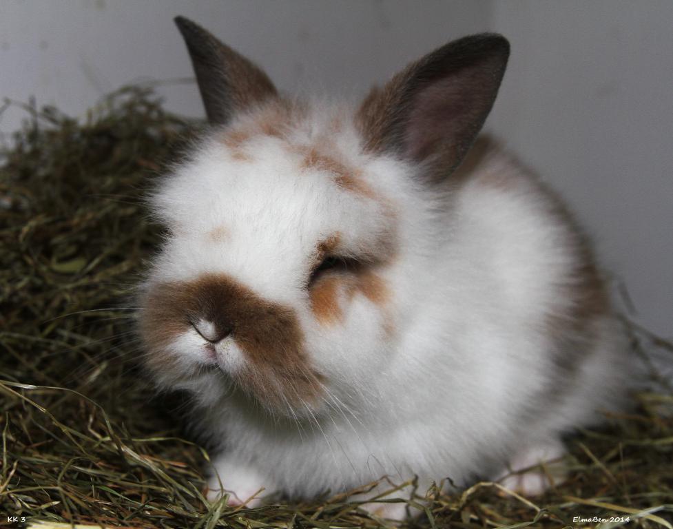 My baby bunnies-img_6587x.jpg