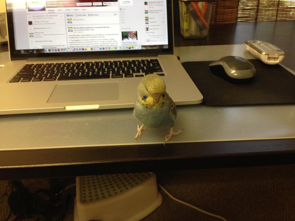 25% of my budgies, or Bucky ventures out of his quarantine cage!-img_6646.jpg