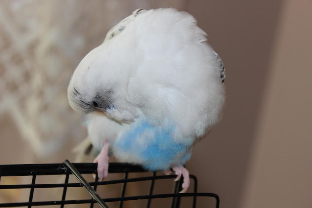 Social Media Pet Account's-img_8251.jpg