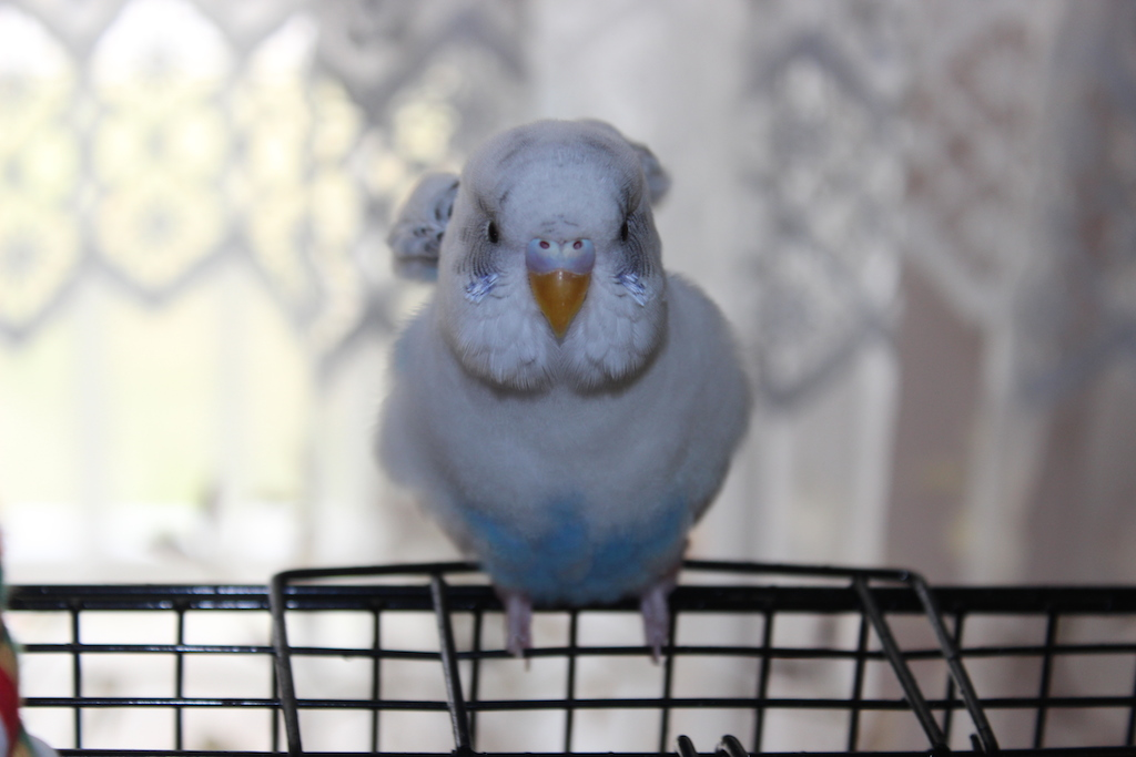 Its snowy again - Is my bird stressed? Extremely Worried.-img_8918.jpg