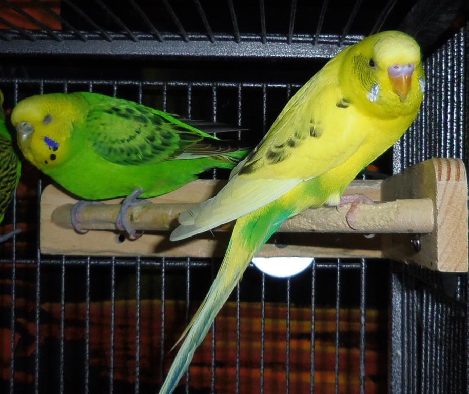 Penelope-imgp3310crop.jpg