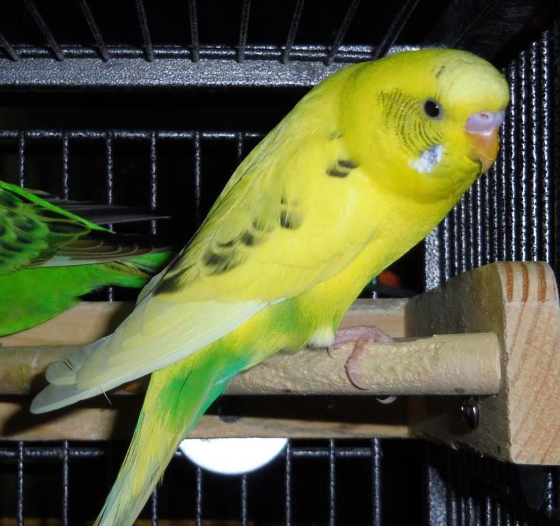 Penelope-imgp3311crop.jpg