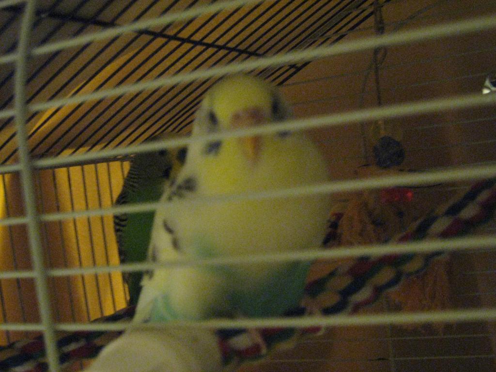 My Lola-ingy-pics-june-20-099.jpg