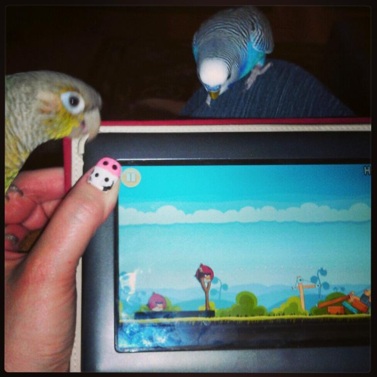 Angry Birds-instagram%24img_20130225_190948.jpg
