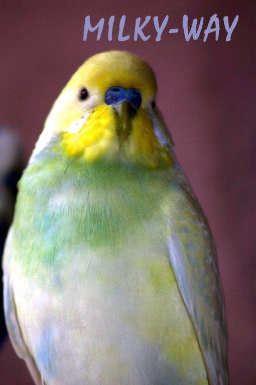 Gradual Colour changing bird...-july-2010_0059e1.jpg