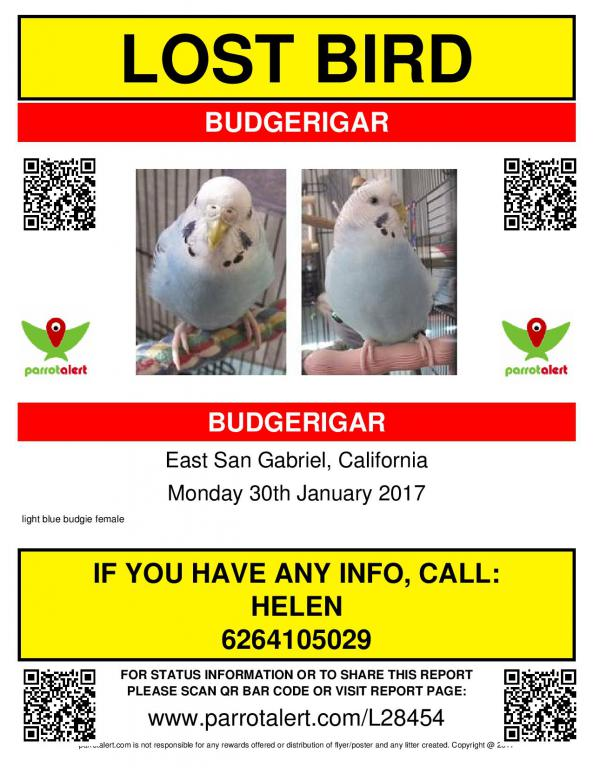 Lost Light Blue Budgie (San Gabriel, CA)-junie-parrotalert-flyer-page-001.jpg