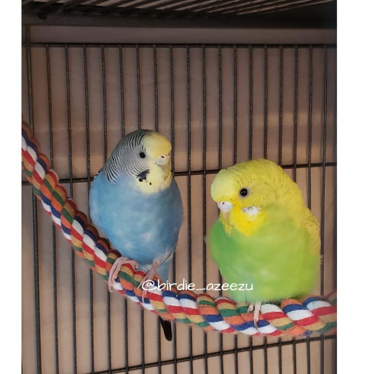 Birdie & Azeezu-just-cute.jpg