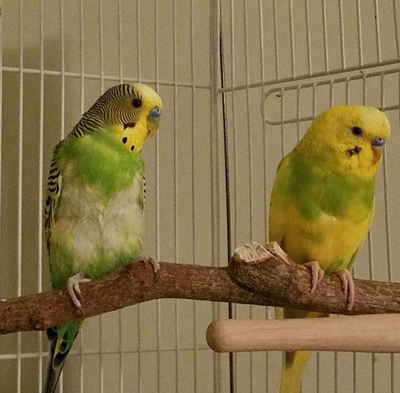Just molting or do we need to worry?-kale-kiwi.jpg