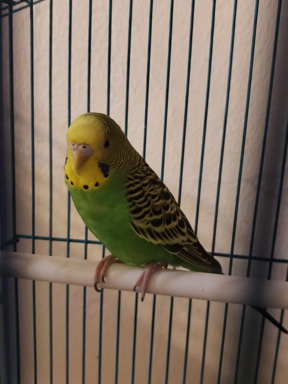 Kiwi - Male or Female-kiwi-1.jpg