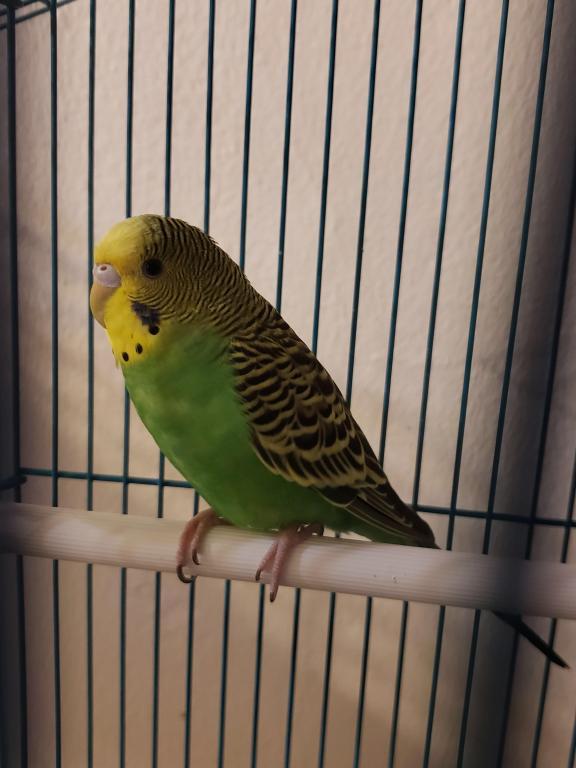 Kiwi - Male or Female-kiwi-3.jpg