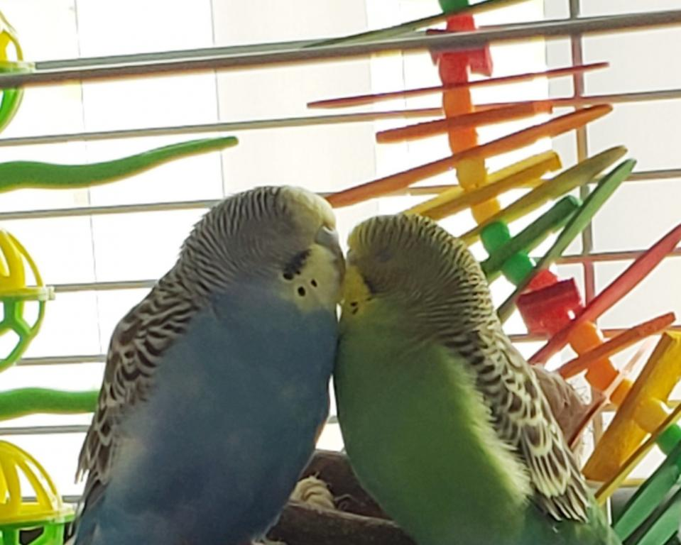 Update on Kiwi -Day 5 of Quarantine & Antibiotics-kiwi-birdie-2.jpg