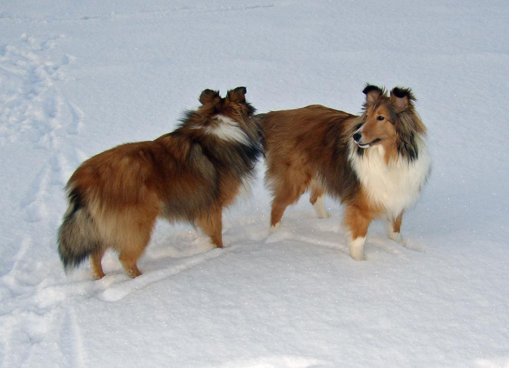 Introducting Kylie and Autumn-kylie-biting-autumns-tail-cropped.jpg