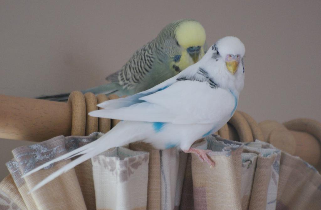 Gender needed for breeding!-l-p.jpg