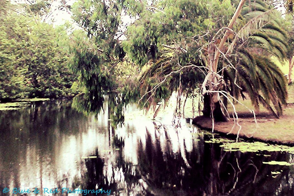 Blue & Red Photography-lake.jpg