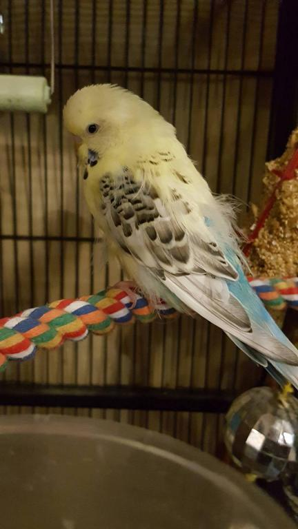 Is my birdy sick?-left.jpg
