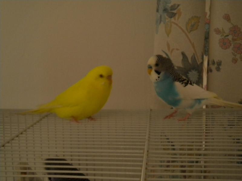 the babies are growing up :D-lemon-hero.jpg