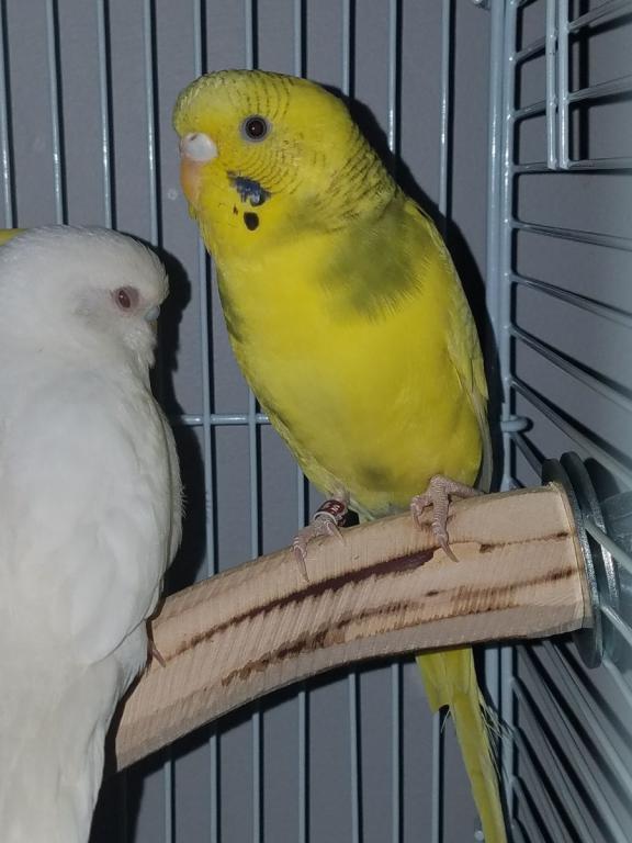 Bonding with the funky flock-lemon.jpg