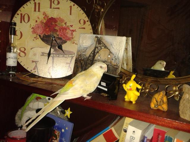 Getting two birds to get along-ludovico-einbirdi.jpg