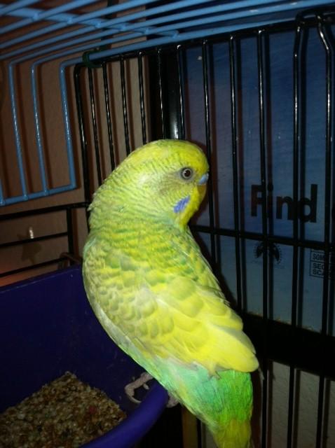 Strange Color - What is his mutation?-lui.jpg