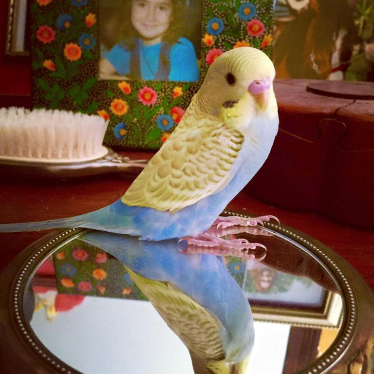 Red/Brown stains on budgies side and tail-milobaby3.jpg