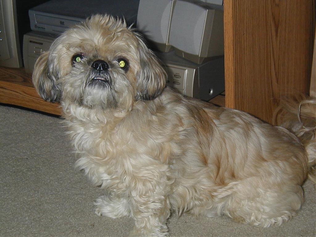 My Poor Maxi dog passed away on Friday!-milos-first-day-3.jpg
