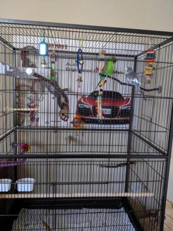 Budgies in a new cage.-mvimg_20190724_194941_1564023112568.jpg