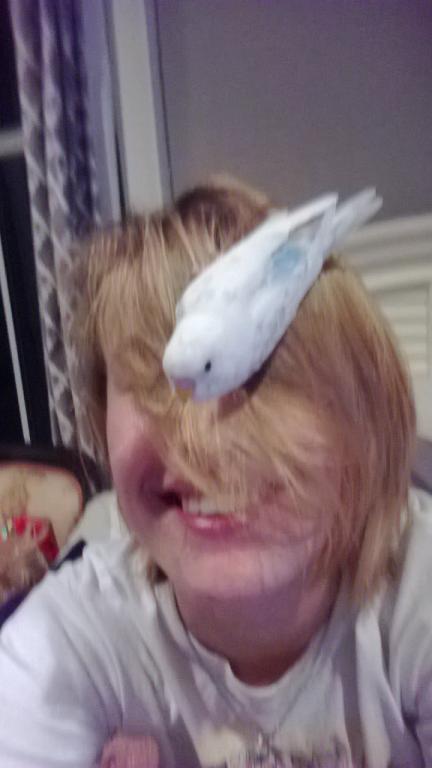 Does your face double as a nest? :D-nestyface.jpg