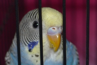 what is sky?-new-budgie-015.jpg