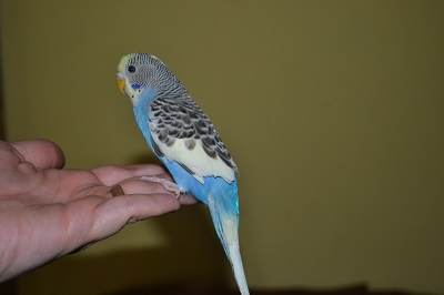 what is sky?-new-budgie-018.jpg