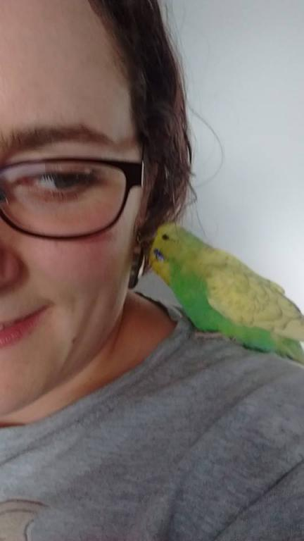 Getting two birds to get along-nibbly-reggie.jpg