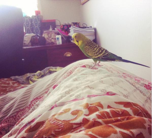 My Friend Budd-no-sleeping-.jpg