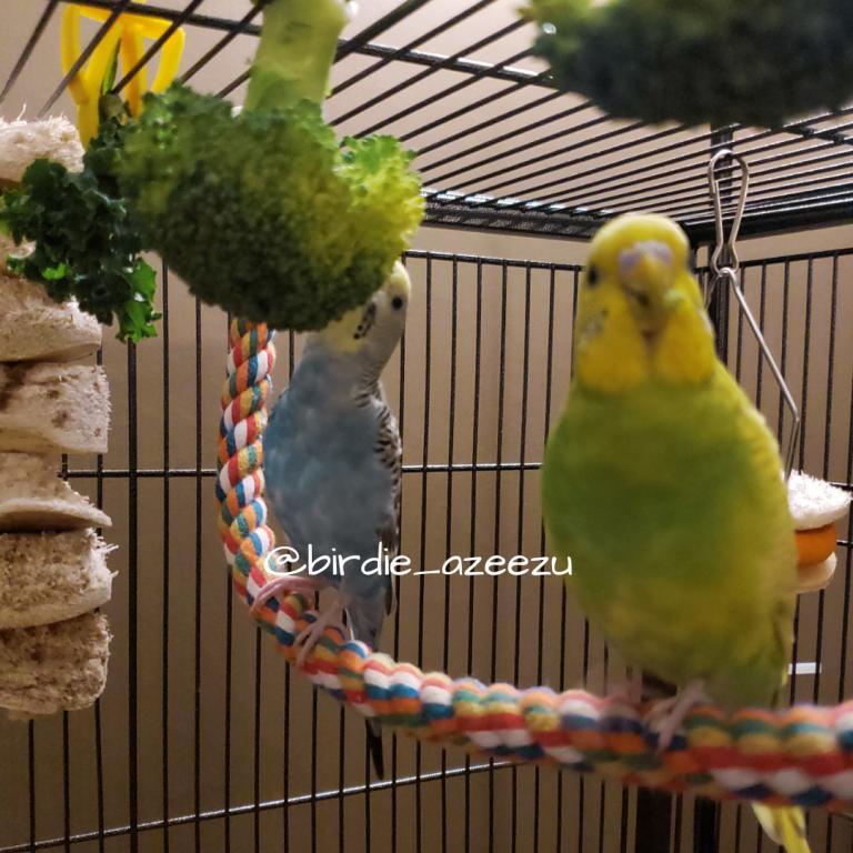 Birdie & Azeezu-nom-nom-nom.jpg