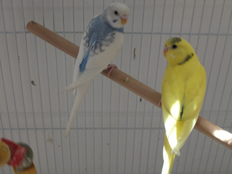 the babies are growing up :D-number-1-2.jpg