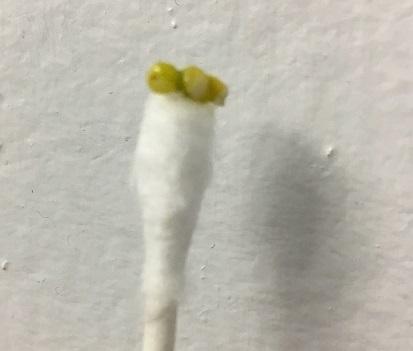 Undigested seed-obzv1pk.jpg