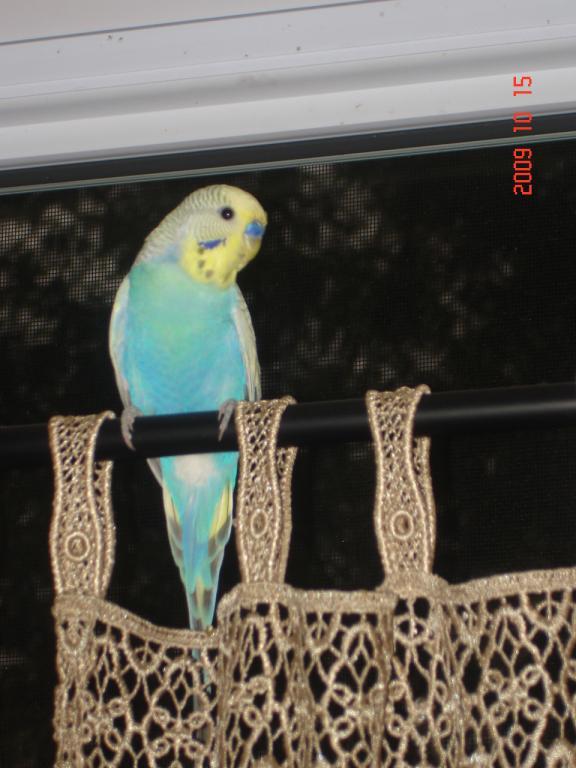 my skye-oct2009-041.jpg
