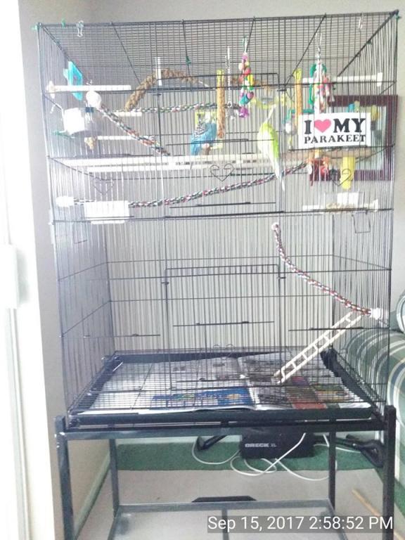 I want a bigger cage-oz-charlie-cage.jpg