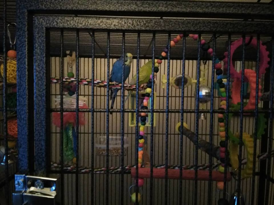 new HUGE cage-oz-charlie-new-house.jpg