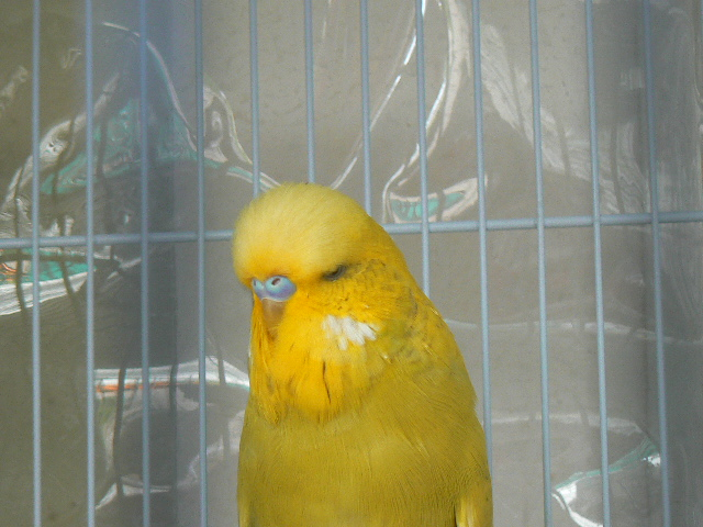 Albie our new addition to flock-p1140506.jpg