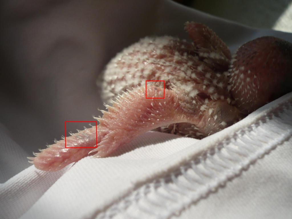 Baby mutations by pin feathers-p1220169.jpg